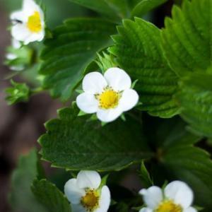 私がオススメするVTuber10種を紹介する(その3):花譜・バーチャルゴリラ