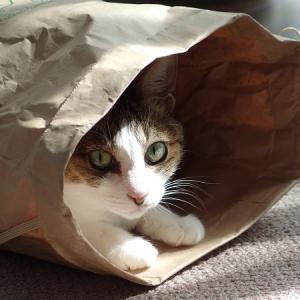 猫がヤバイ