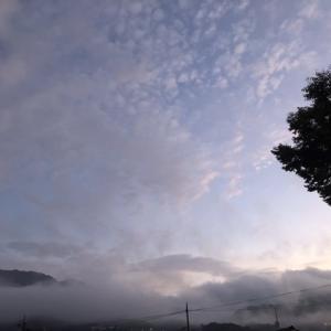 雨上がりの夜明け前,朝霧と高い空と…今朝の収穫と🌿