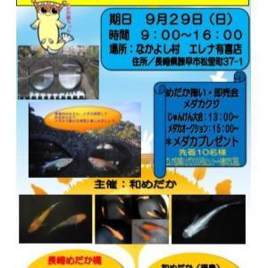今週は長崎県でメダカイベントですよ!!
