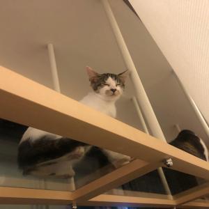 猫とまたたび