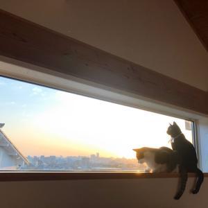 調子に乗ってきた丸い猫