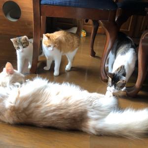 緊迫状態の猫家族