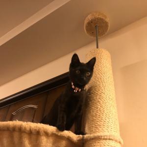 辛い時は猫を見習えっ!
