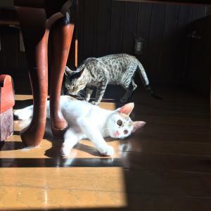 ブログ:保護猫カフェ納め
