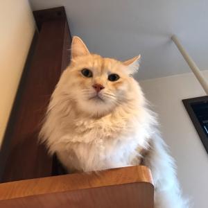 ブログ:常にドヤ顔の猫