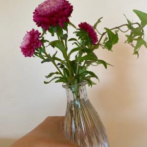 間違い探しなお花とすごいオキシ。