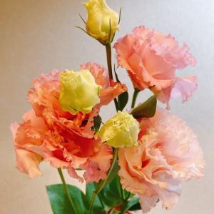今週のお花❁