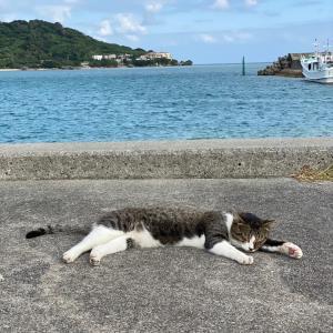 那覇到着→猫の島❤︎