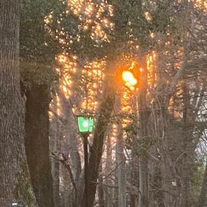 夕陽と梅。