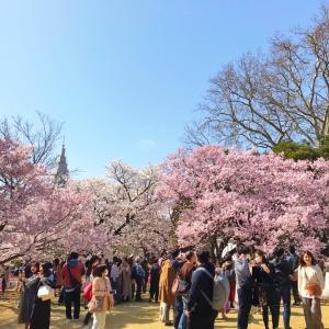 こんな時でも桜は変わらず咲く