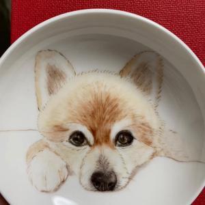 柴犬カットのポメラニアン ♡クマタンをお皿に描きました