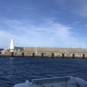 伊豆大島の釣りサバをいただいた