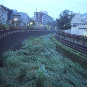 【早朝のお散歩】 2020/6/15 早朝のお散歩の後は、シャワーで最高!!