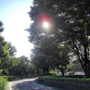 【お散歩】20/6/20 「最終的に自分の思い通りになるなら、私はいくらでも忍耐強くなれる」