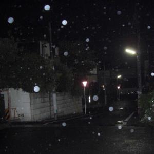 【早朝のお散歩】  2020/9/25 霧雨の早朝を歩く