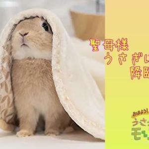 『サタデーおはうさモーニング』9/25(sat)