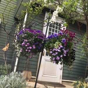 ようこそ🦋紫色のお庭へ!