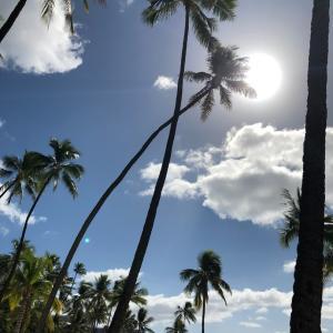 ハワイのスタバと、獅子座満月のリーディングと、イベント出店について