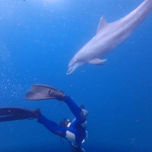 東京から気軽にいける!イルカと泳げる島〜三宅島編