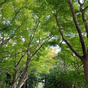 Autumnal green & 新幹線でお弁当