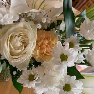 ミスチル 「花の匂い」