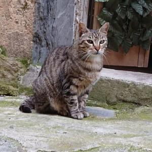 北イタリアの旅37〜モンテロッソアルマーレのネコ歩き〜