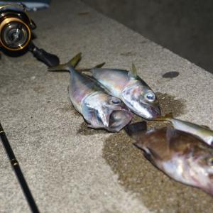 土曜日の釣果! 厳しかったです。