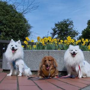 久しぶりに 昭和記念公園へ