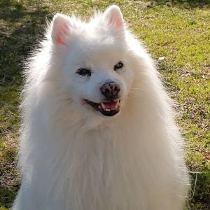 お友達の愛犬💛画像をお借りして m(_ _)m 加工です。