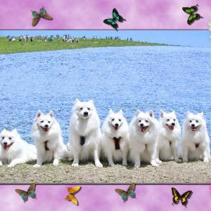 👀 ヴィヴィある家族の画像をお借りして直し!