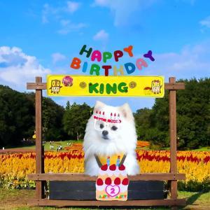 #お友達ワンコ (昨日)2歳のお誕生日でしたぁ~っ。
