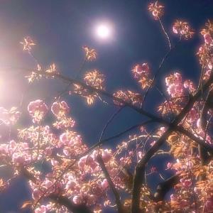 ◆スーパームーン満月・新しい経験を受け入れ、感じ、進化する★