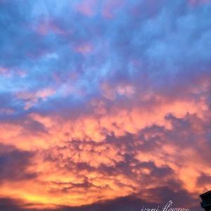 今日の夕空と秋の味覚と花々♬
