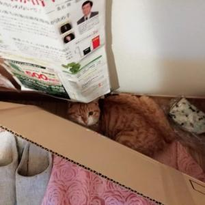 猫に会いに行って来ました