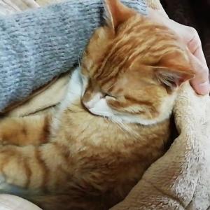 猫を飼うという事