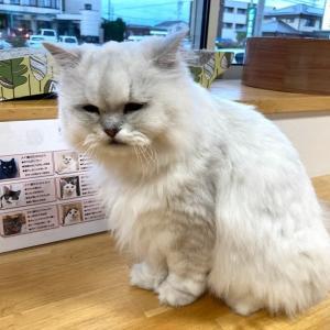 猫カフェ、2回目