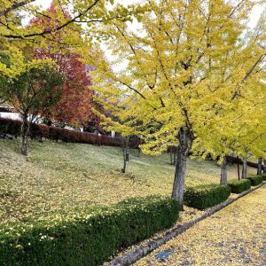 銀杏並木とフレンチランチ