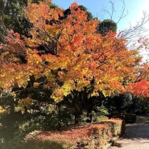 紅葉深まる植物園に行って来ました