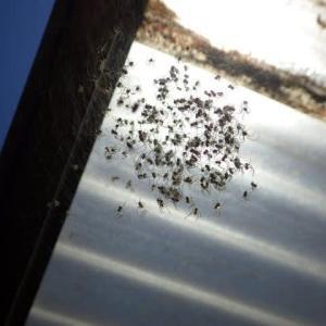 クモの子を散らす