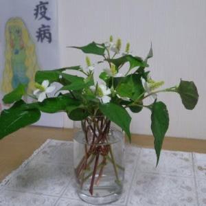 dokudami flower arrangement