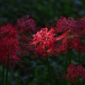 秋は花が…愛と死を見つめて