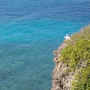 南の島の景色 「芭蕉布」