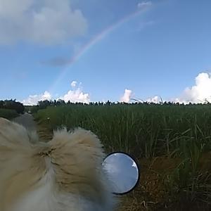 心の風景 リッキーと一緒に見る「虹の橋」