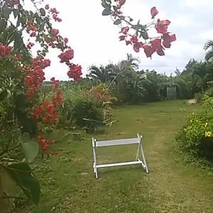 海の見える庭 いまいっぱいに咲き誇るブーゲンビリア