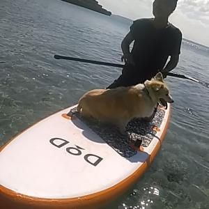 この夏シーズン最後 リッキーと遊ぶSUPボード
