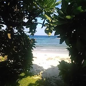 南の島に生きて リッキー朝の散策 7月暑さで浜辺の木陰へ