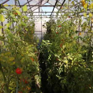 日曜日は内装工事の進捗状況とミニトマトの収穫でダーチャへ