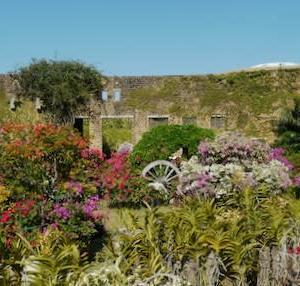 なんやかんやで初めての沖縄(4) 南国の花園と伊江島の悲劇