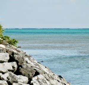 なんやかんやで初めての沖縄(5) 戦争のために殺される美ら海・辺野古